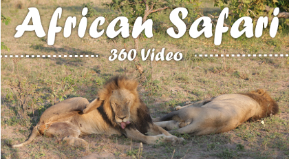 African safari 360 video